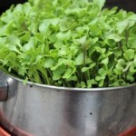 Microgreens from your own saved seed