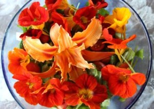 Day lilies and nasturtium flower decorating a salad