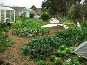 15-08-29 Sue's Garden -1