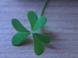 Heart shaped Oxalis leaf