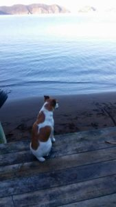 Pete on dolphin watch